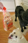 Our dogs love bread!