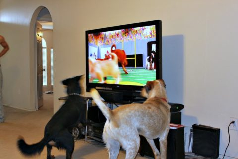 dogs watching Puppy Bowl on TV