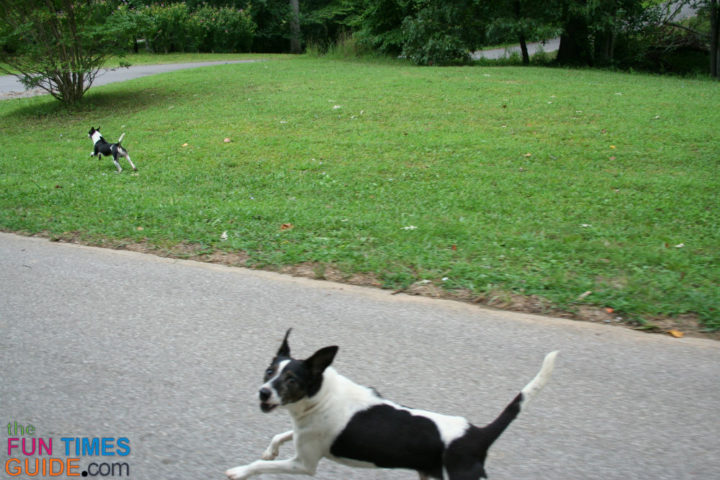 Invisible Fence Review: The Pros & Cons Of Invisible Dog Fences ...