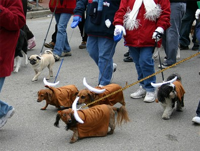 dogs-running-of-the-bulls.jpg