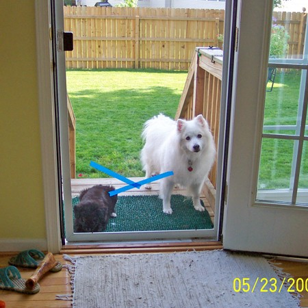 Destin and Jersey waiting to be let back in the house.
