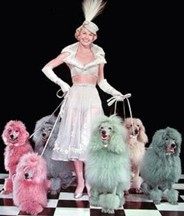 Doris Day and her brightly colored dogs.