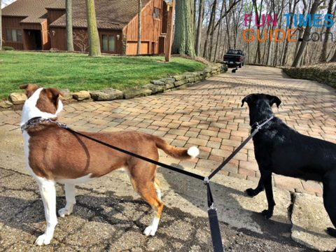 We love our double dog leash -- because our 2 dogs go everywhere together.