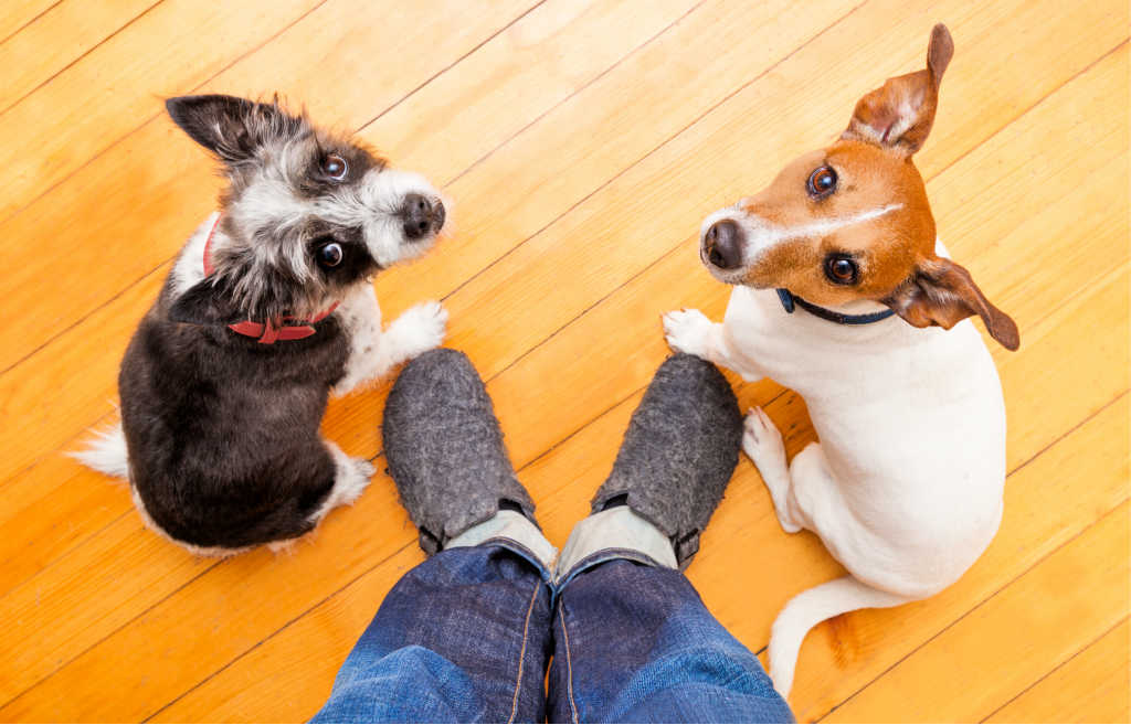 Having multiple dogs at home can be fun and rewarding, but it also requires a lot of hard work and time.