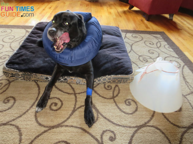 See our favorite dog cone collar alternative.