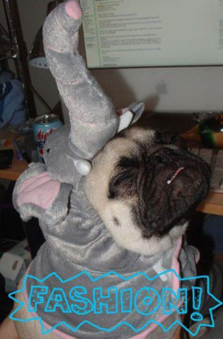 elephant-dog-costume.jpg