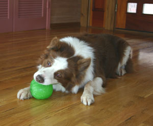 everlasting fun ball for dogs