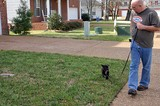 Jim testing Destin's recognition of his name while walking on the leash in front of our house.