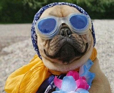fashionable-diva-dog-on-the-beach.jpg
