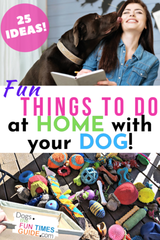 25 fun things to do at home with your dog - especially if you're stuck at home and bored!