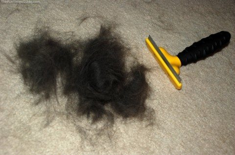 After using the Furrminator dog brush -- lots of dog fur!