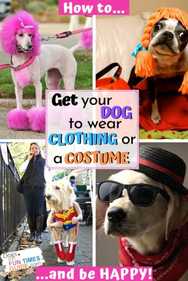 How to get your dog to wear clothing or a costume... and be happy!