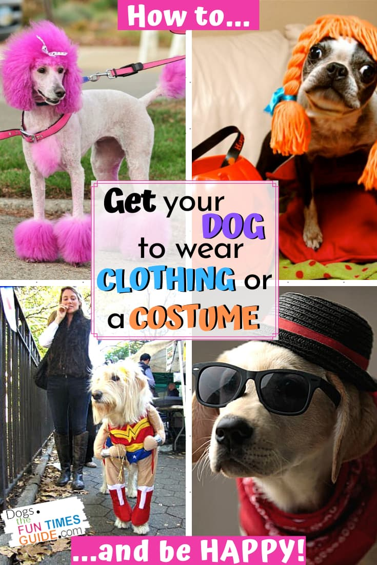 Dog Clothing 101 ~ How To Get Your Dog To Wear A Halloween Costume Or Other Clothes For Dogs