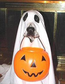 ghost_dog_costume.jpg