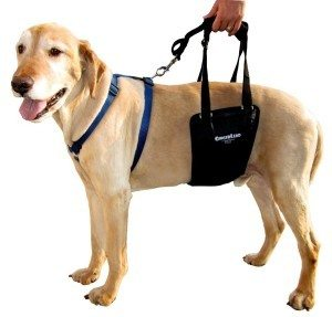 ginger-lead-dog-rehabilitation-harness