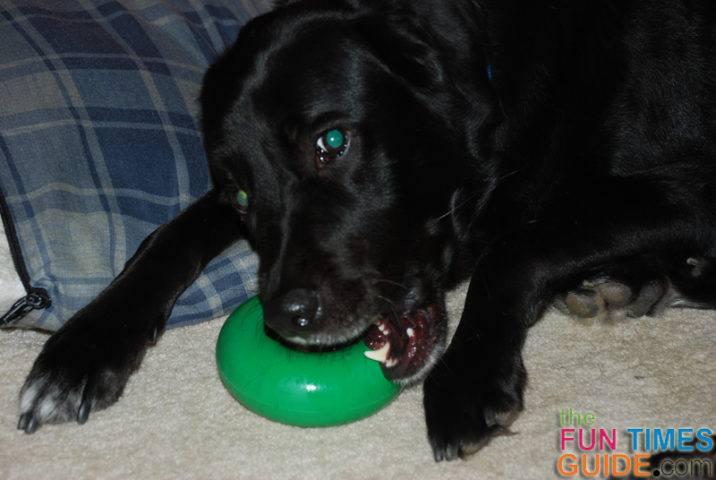 GoughNuts Dog Chew Toy Is Virtually Indestructible