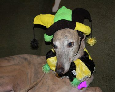 greyhound-dog-in-joker-costume.jpg