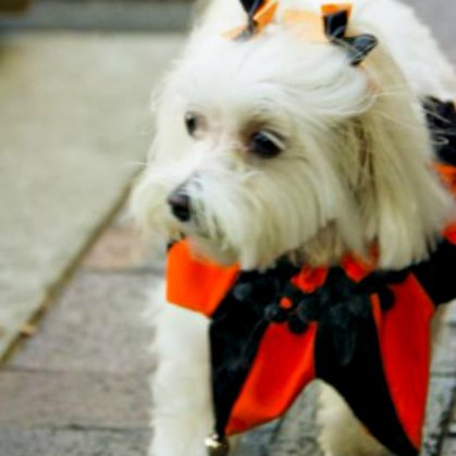 It's easy to find seasonal over-the-head neckwear (like the jester dog collar seen here) and holiday hair bows for dogs.
