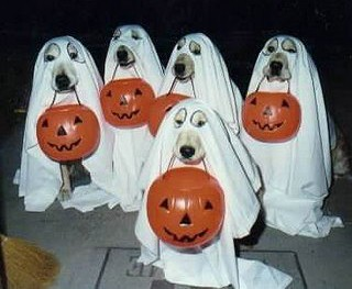 halloween-dogs-as-ghosts.jpg
