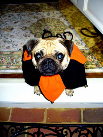 halloween-dogs-by-geraldbrazell.jpg