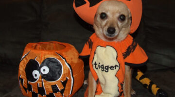 Easy Homemade Dog Treats For 4-Legged Trick-or-Treaters On Halloween
