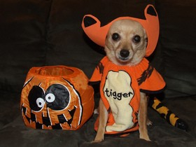 halloween-homemade-dog-treats-by-s13610.jpg