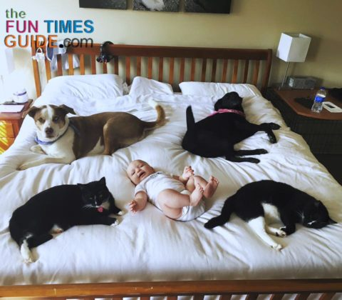 All of our babies... 2 dogs, 2 cats, and 1 baby! See how we made cheap dog beds for our pets to sleep on.