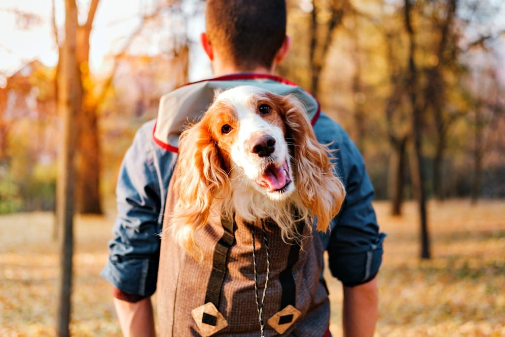 If your dog is more comfortable being carried around, then tote him around in a backpack!
