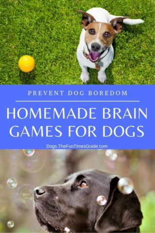 Homemade brain games for dogs to prevent dog boredom