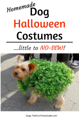 No-sew dog Halloween costumes