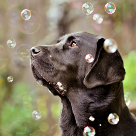 dog mental stimulation with bubbles