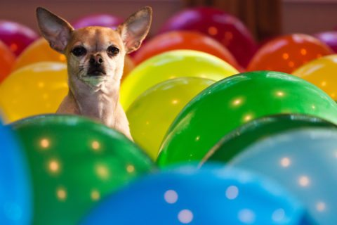Dog color vision explained - dogs see colors differently than we humans do.