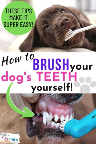 How to brush your dog's teeth yourself... the EASY way!