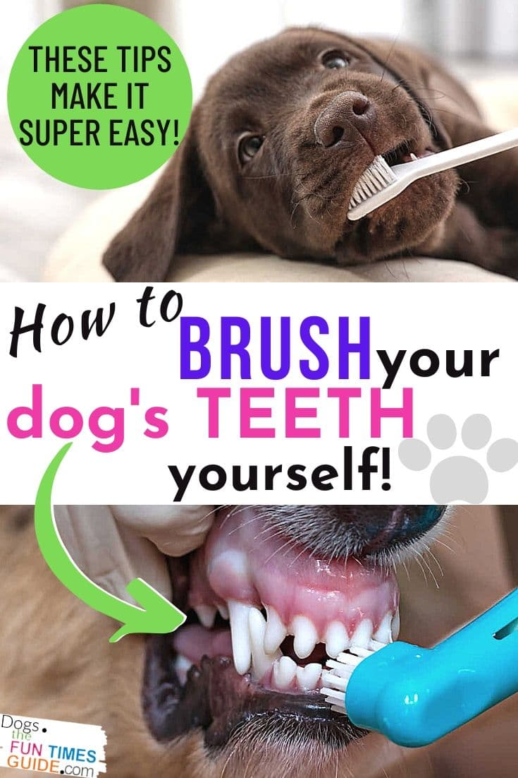 Dog Teeth Brushing Tips: See Exactly How To Brush Your Dog\'s Teeth Yourself (It\'s Cheaper Than A Dog Dental Cleaning, After You\'ve Waited Too Long!)