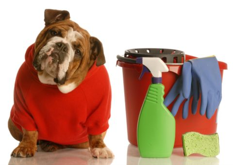 If you're stuck at home today, try to think of something that would cross an item off your ToDo List AND include your dog at the same time. Here are some ideas!