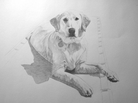 how-to-draw-a-dog