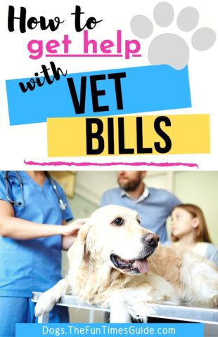 How to get help with vet bills!