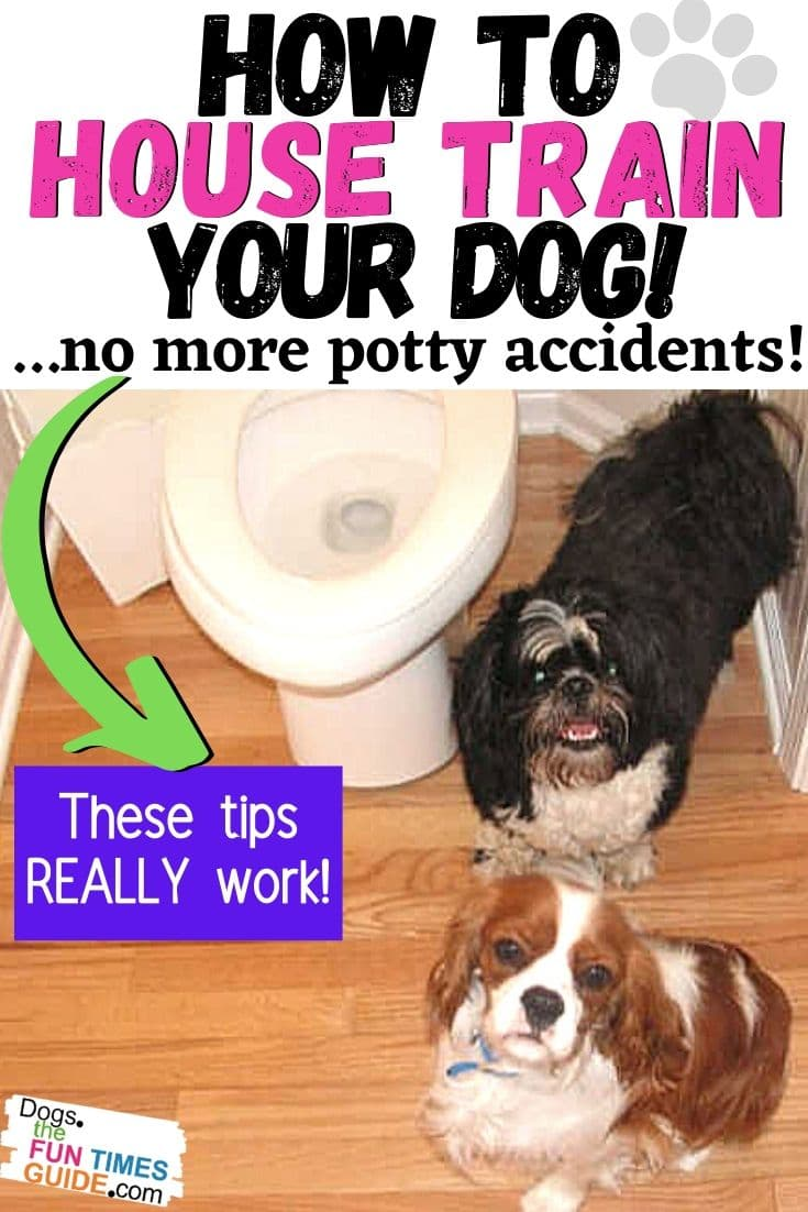 How To House Train A Dog To Prevent Potty Accidents Inside Your Home