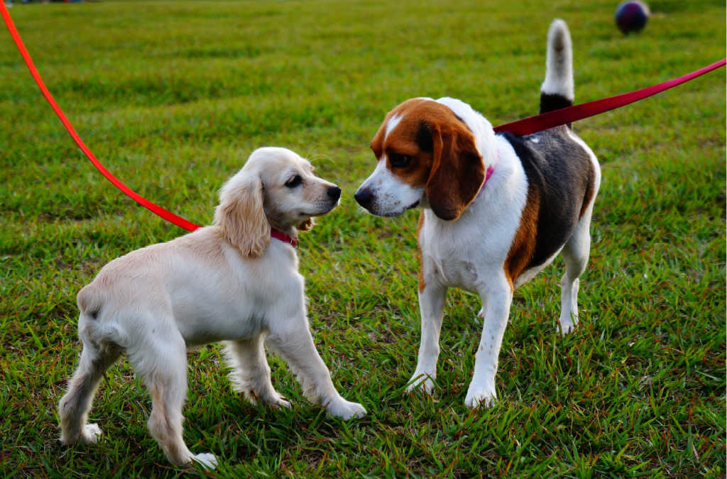 As long as you take it slow when introducing two dogs, even two female dogs can get along!