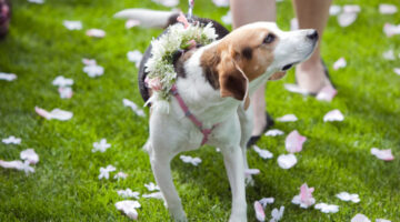 Would You Marry Your Dog?