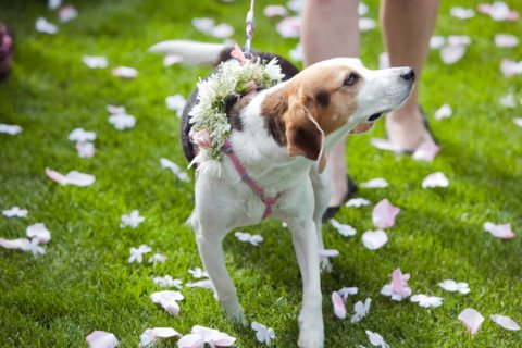 Here are the ways that you can marry your dog!