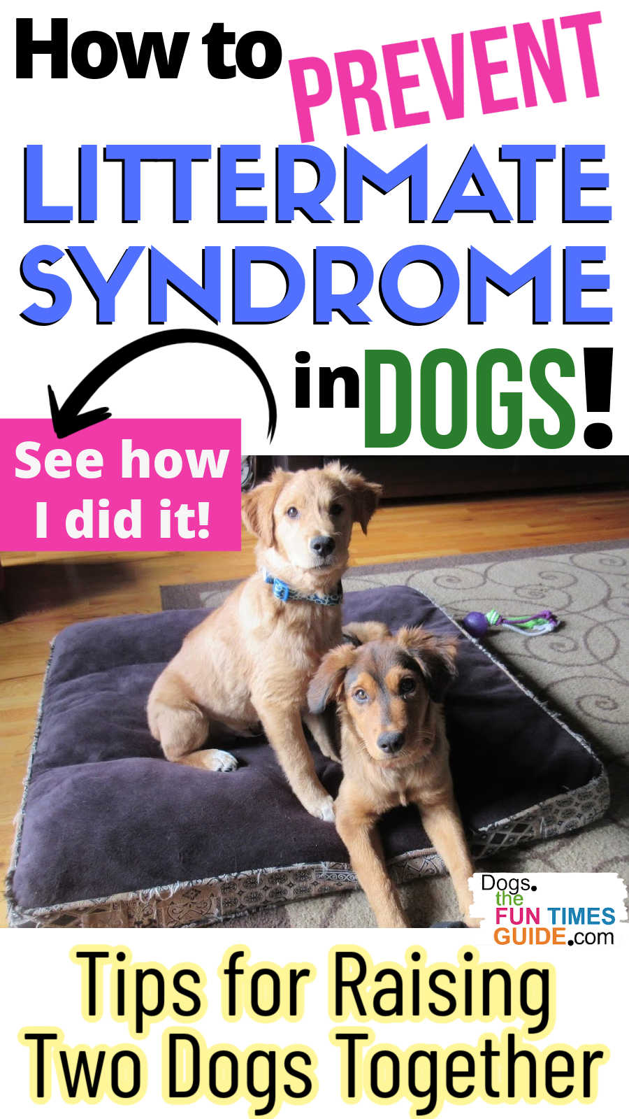 Preventing Littermate Syndrome In Dogs: How To Raise Two Puppies (From The Same Litter OR Different Litters) At Once Without Issues