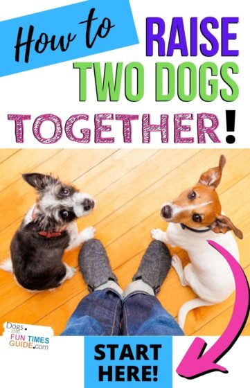 How to raise two dogs together in the house