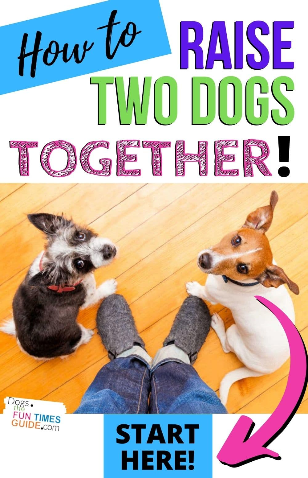 Tips For Raising Two Dogs Together: How To Manage A Multi-Dog Household With Ease