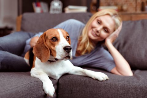 There's no better time than when you're stuck at home to teach your dog some new tricks, basic commands, and good manners.