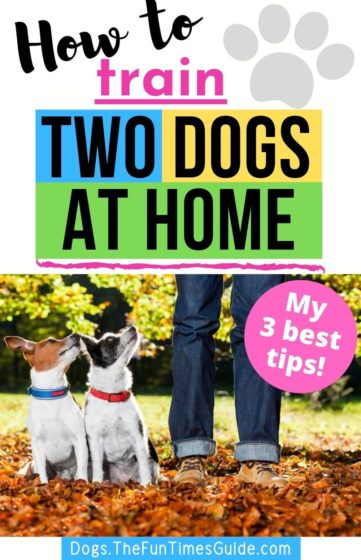 How to train two dogs at home yourself!