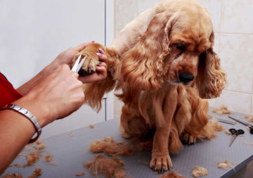 Trimming the fur on top of your dog's paw makes your dog look well groomed.