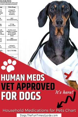 Human Medications Vet Approved For Dogs
