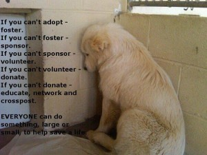 if-you-cant-adopt-foster