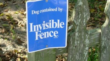 Before Installing An Invisible Dog Fence, Consider These Reasons NOT To Get Electric Dog Fences